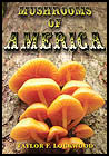 Mushrooms of America